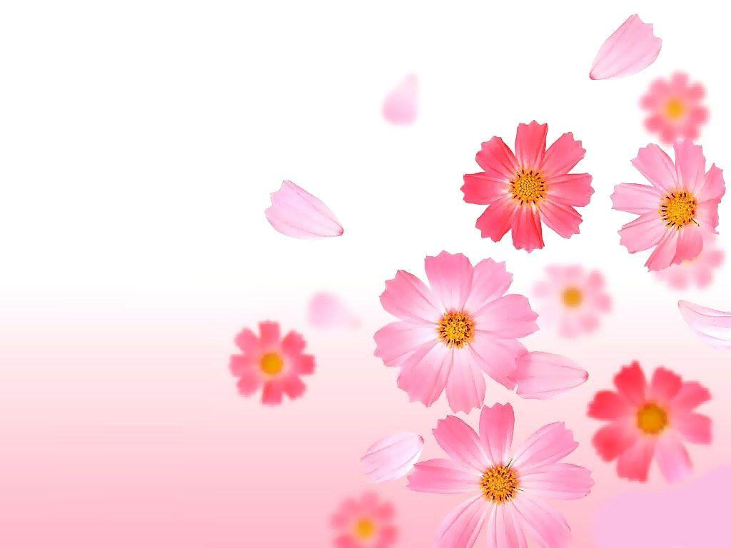 Cool Collection: Pink Flowers Images, HD Widescreen Pink Flowers ...