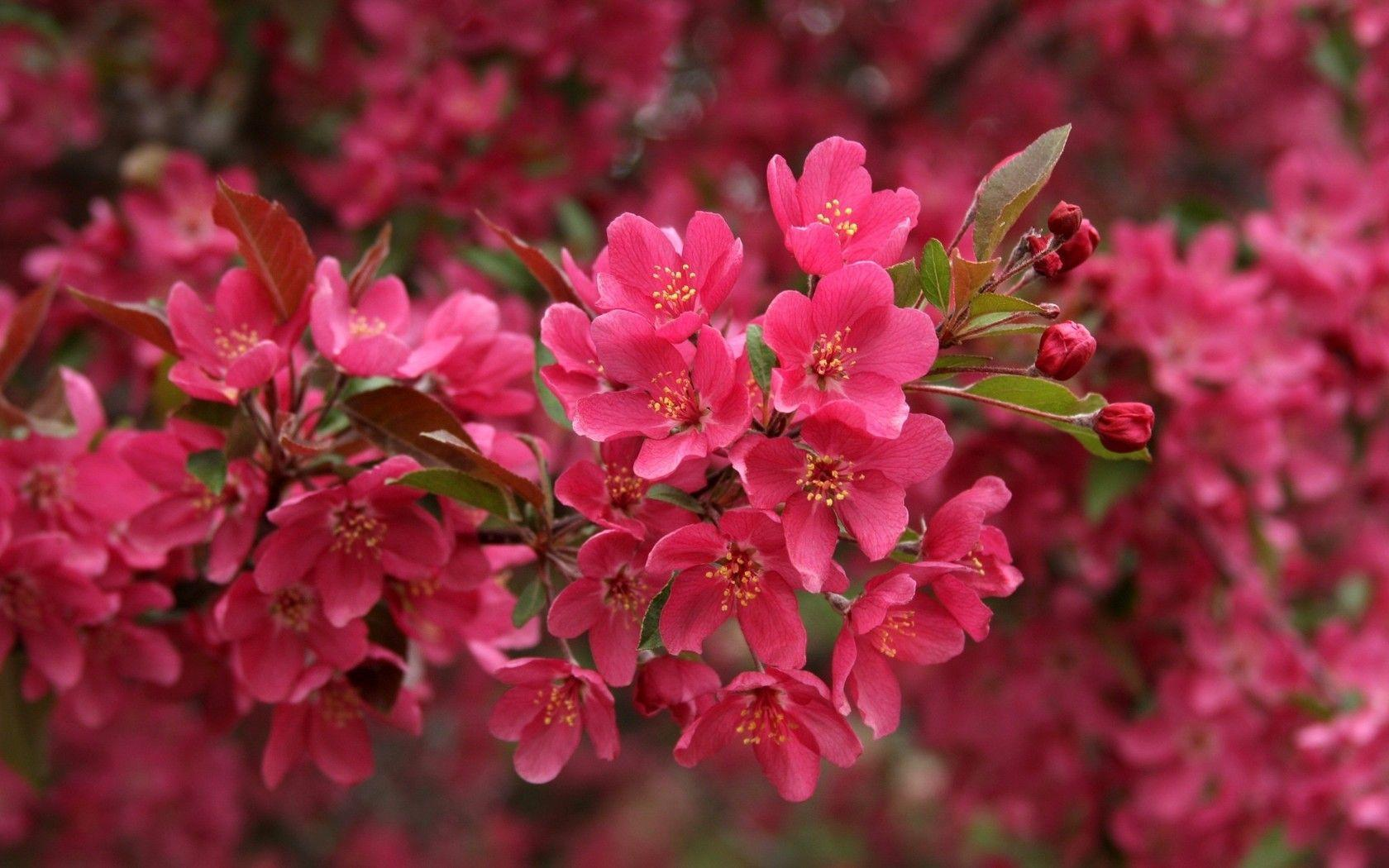 74 beautiful pink flowers wallpapers Pictures