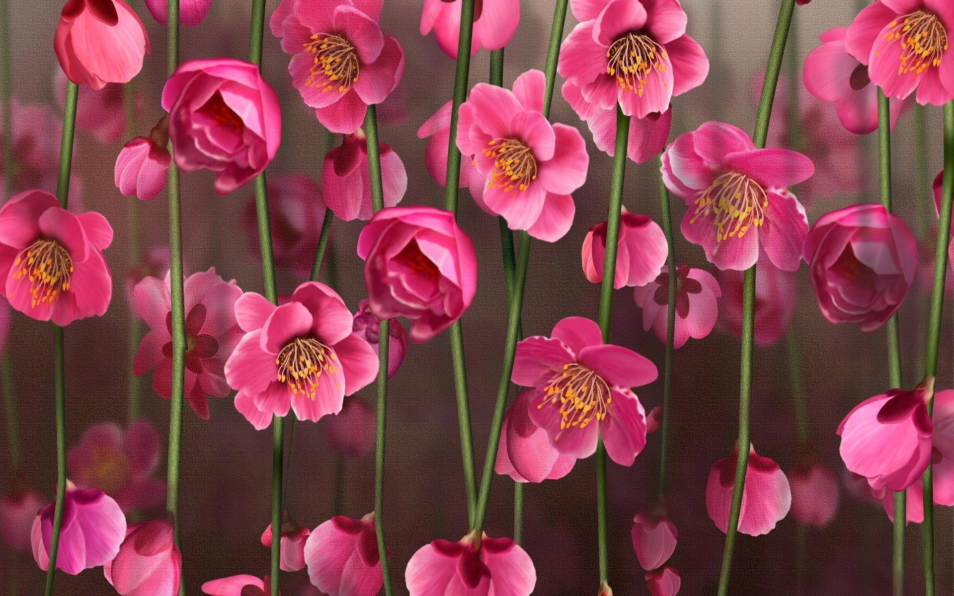 Pink Flowers Wallpapers, Fantastic Pink Flowers Pictures   2016 ...