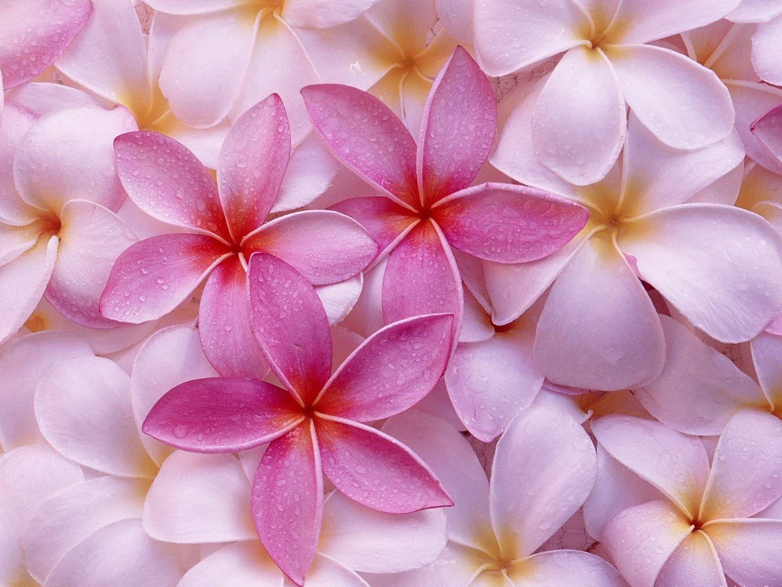 Pink Flowers Wallpapers, Fantastic Pink Flowers Pictures | 2016 ...