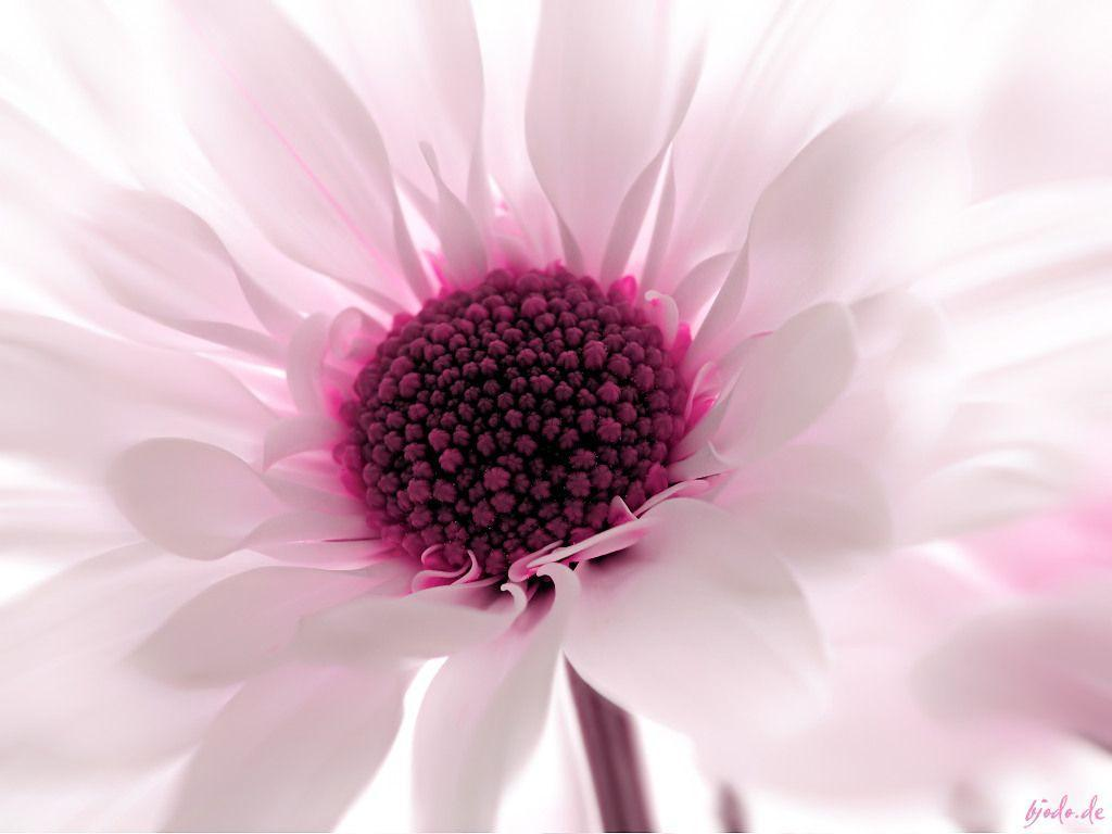 17 Best images about Flowers Wallpapers on Pinterest   Flower ...