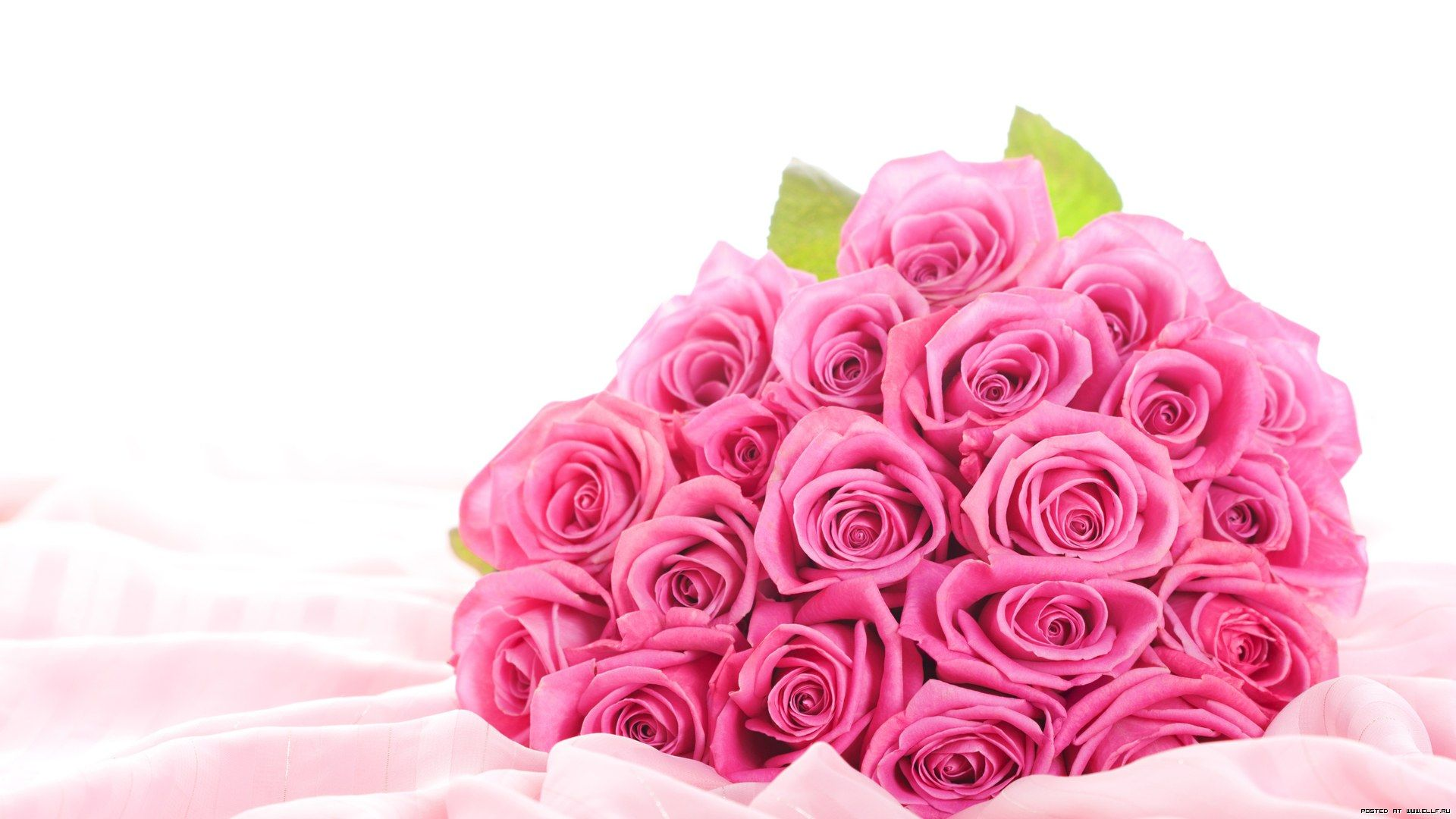 Pink Rose Flower Dekstop Hd Wallpaper #2828 Wallpaper ...