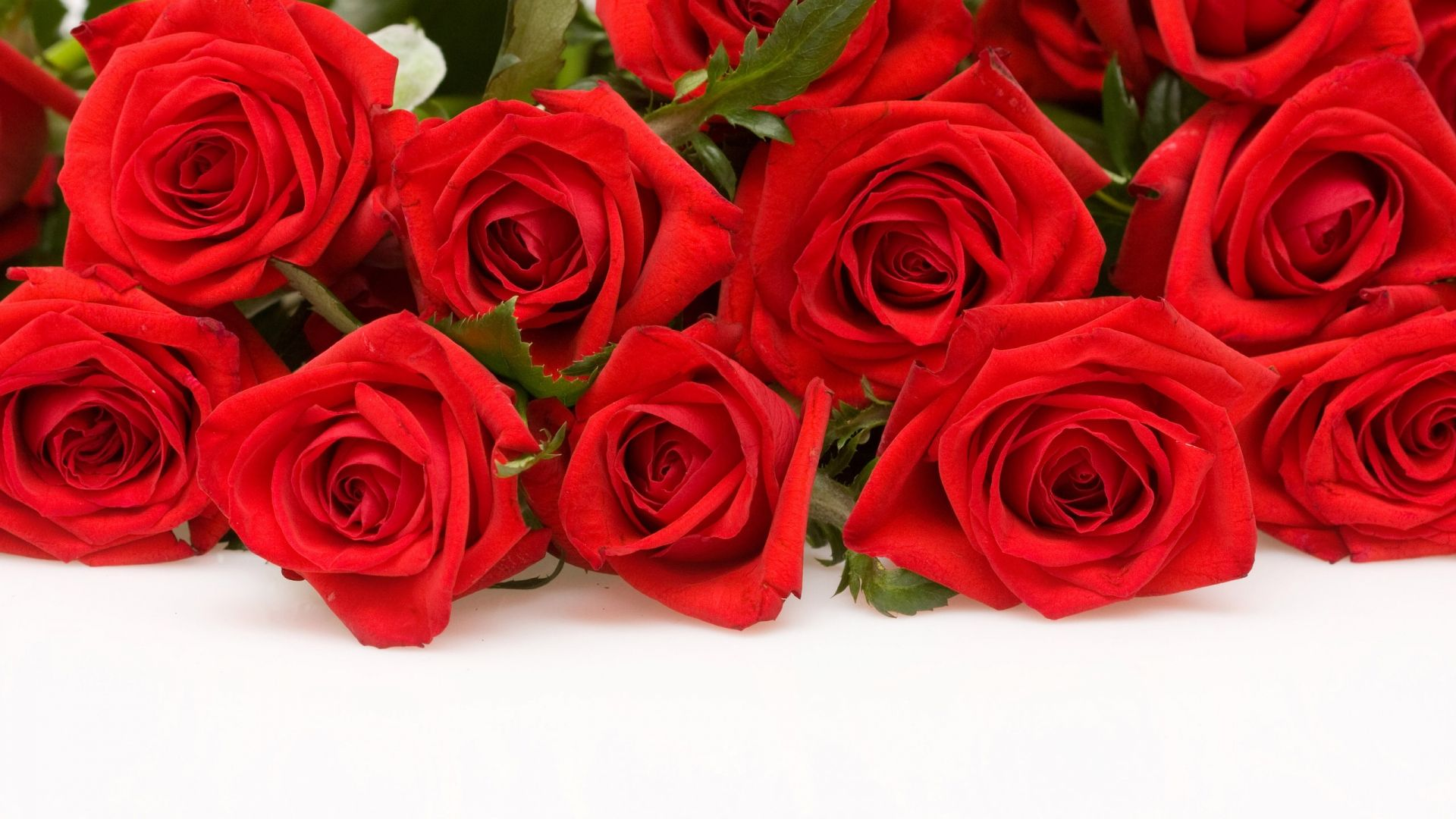 Red Roses Wallpaper Backgrounds | Red Roses HD Wallpaper, Flowers ...