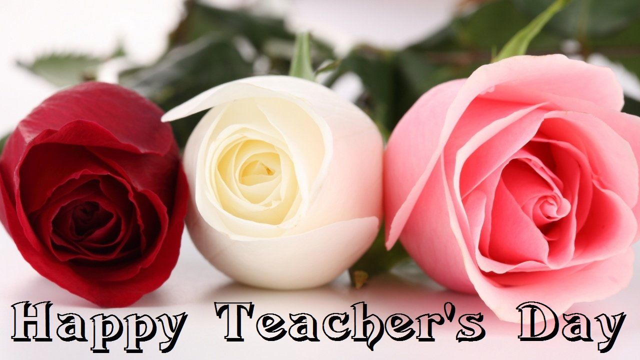 Happy Teachers Day Wishes Roses Flowers Hd Wallpaper