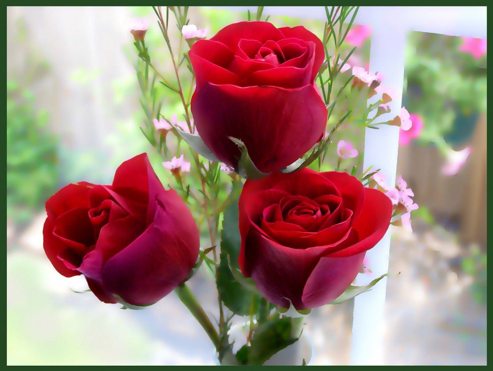 Rose Flowers Wallpaper Android Apps on Google Play | HD Wallpapers ...