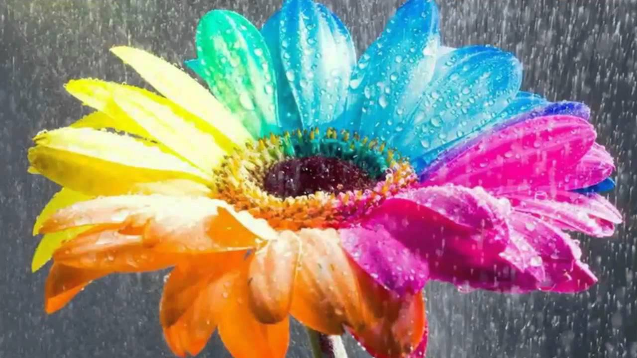 Most Beautiful Flowers Wallpapers 3d 1 - YouTube