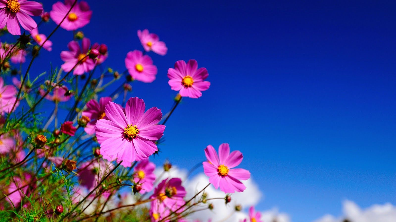 Download New Flowers Full Screen Hd Photo High Quality Backgrounds ...