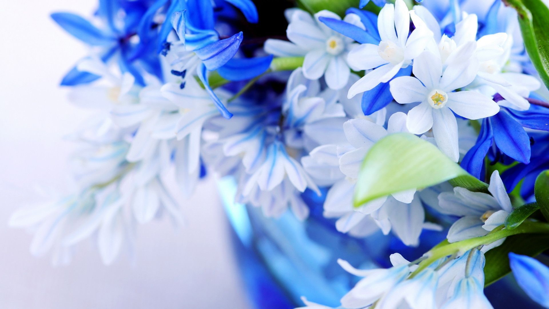Desktop-Wallpaper-HD-3D-Full-Screen-Flowers - wallpaper.wiki