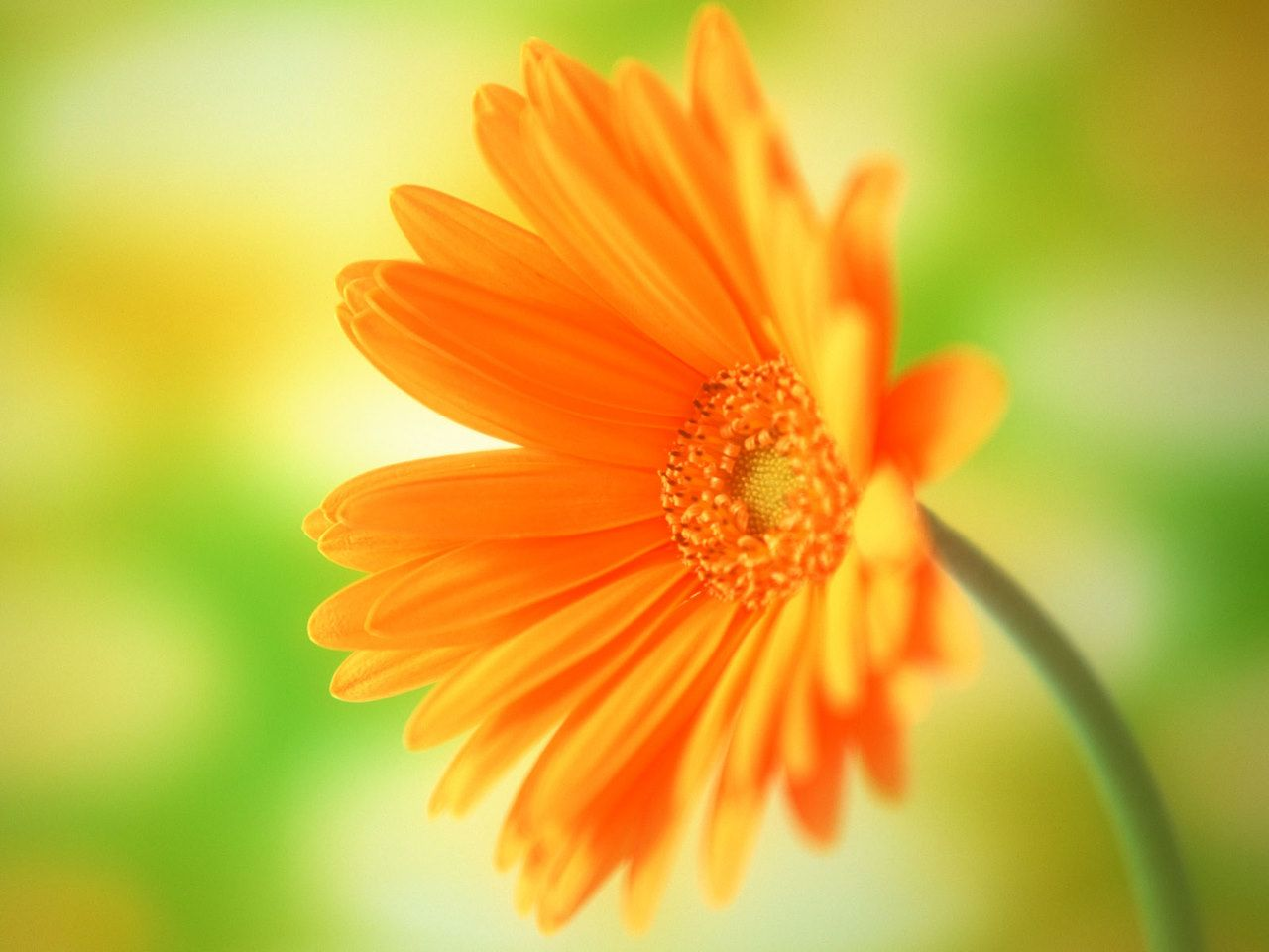 LATEST WALLPAPERS: Flowers Wallpapers, Flowers Animated Wallpaper ...