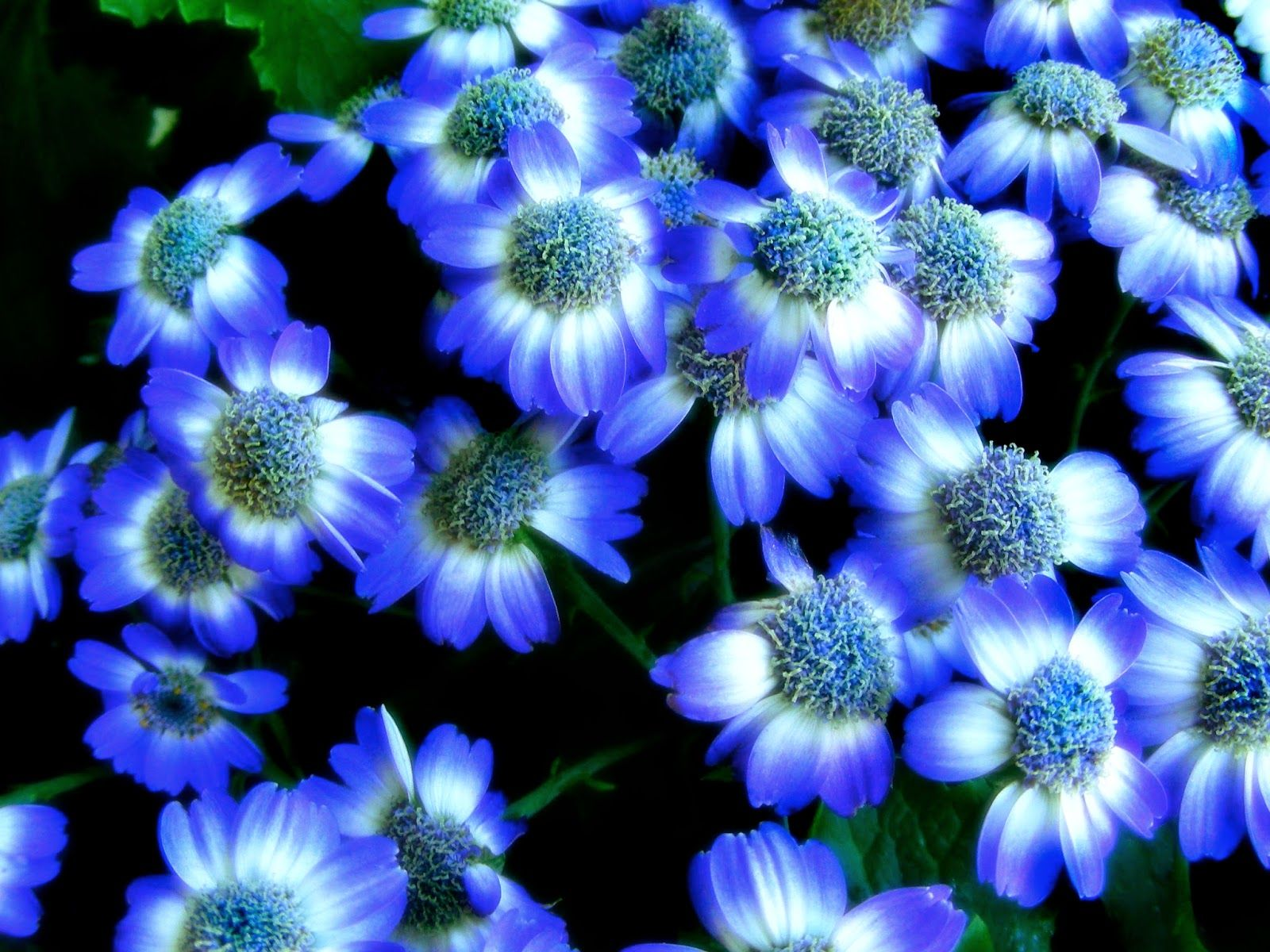 2 Nice Flowers Wallpaper Desktop Background Full Screen | anaknulp