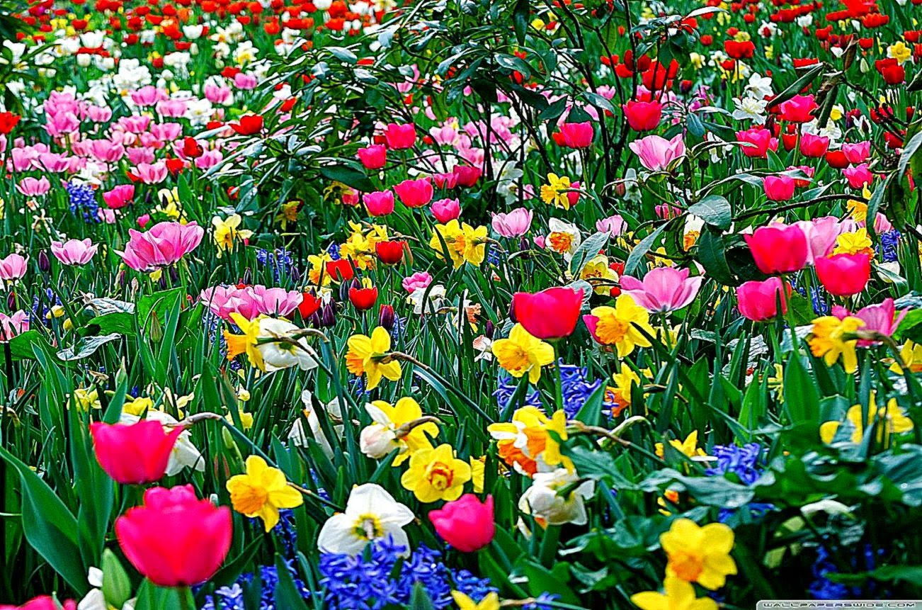 Desktop Spring Flowers | Best Free HD Wallpaper