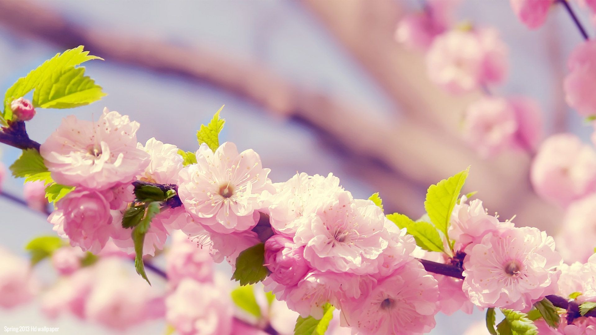 Spring flowers wallpapers HD (60+) - wallpaper.wiki