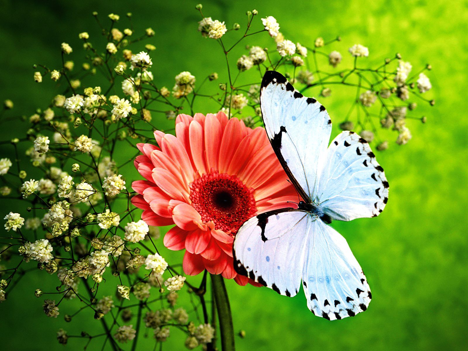Flowers and Butterflies | Pink Flower and Beautiful Blue Butterfly ...