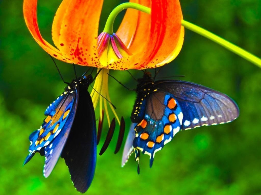 55 Colorful Butterfly HD Free Images Wallpapers Download