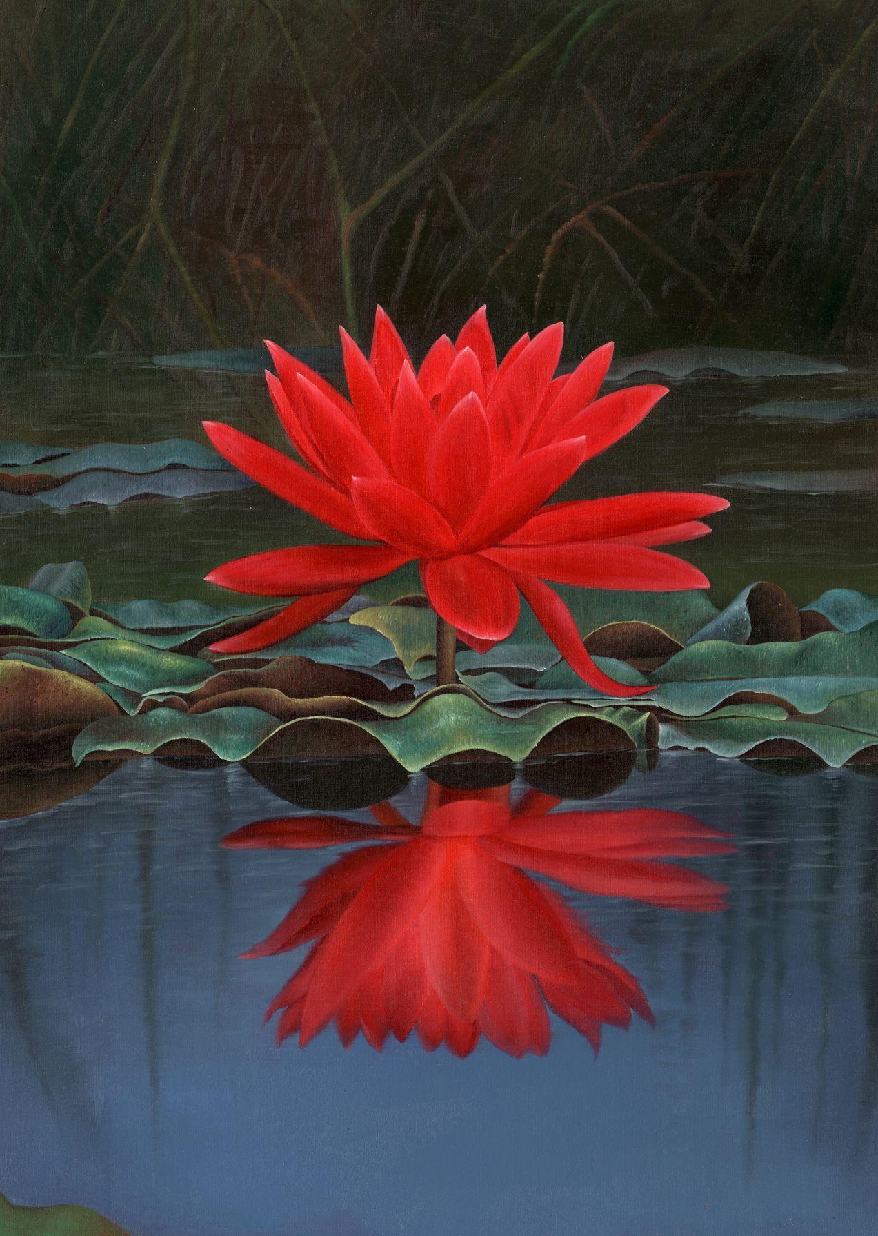exotic flower photos free | Exotic Red Lotus Flower Free Wallpaper ...
