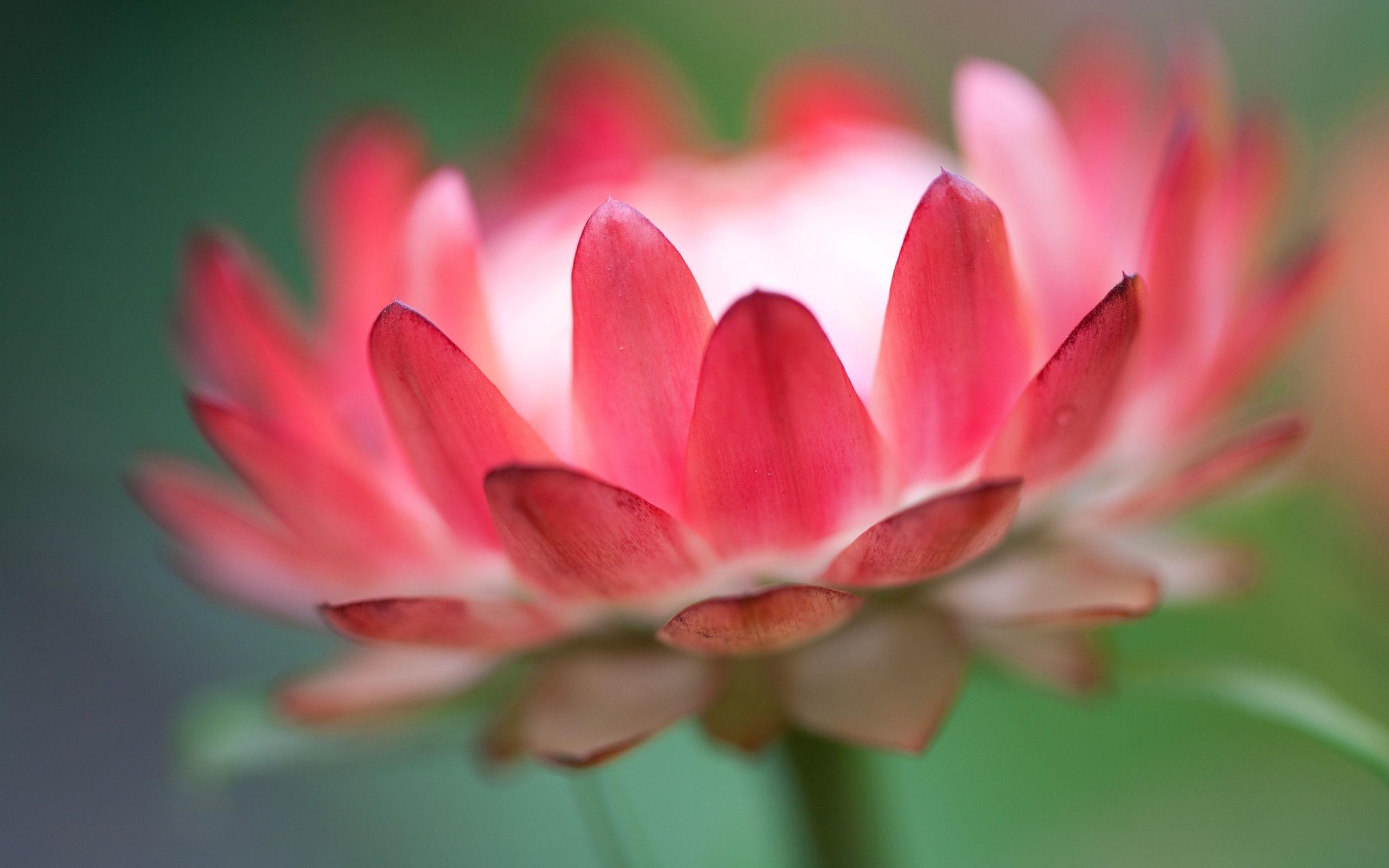 Most Pink Lotus Flower Desktop Hd Wallpaper Photos 3d High Quality ...
