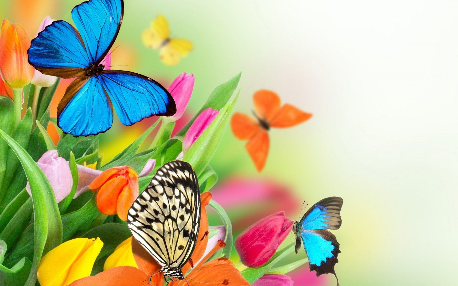 colorful butterfly on flower wallpaper - Download Hd colorful ...