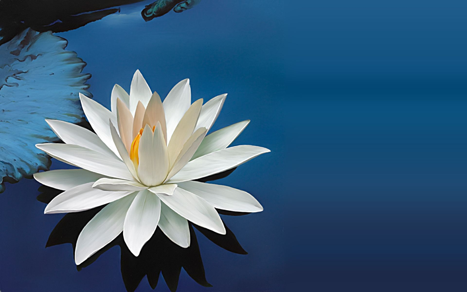 Lotus Flower Wallpaper For Iphone Free Download > SubWallpaper