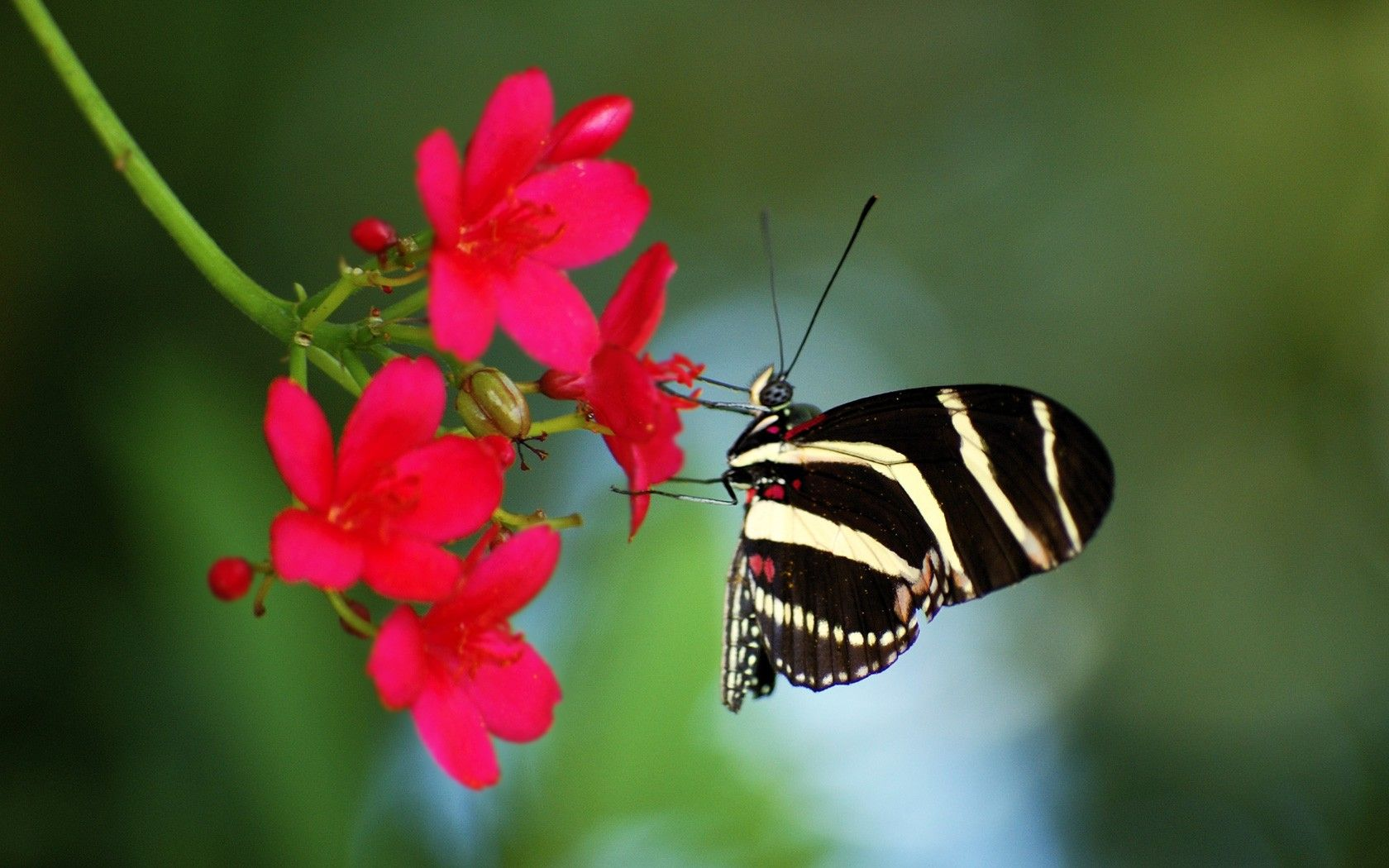 Flowers: Nature Little Butterfly Wing Flower Wallpaper Desktop Full ...