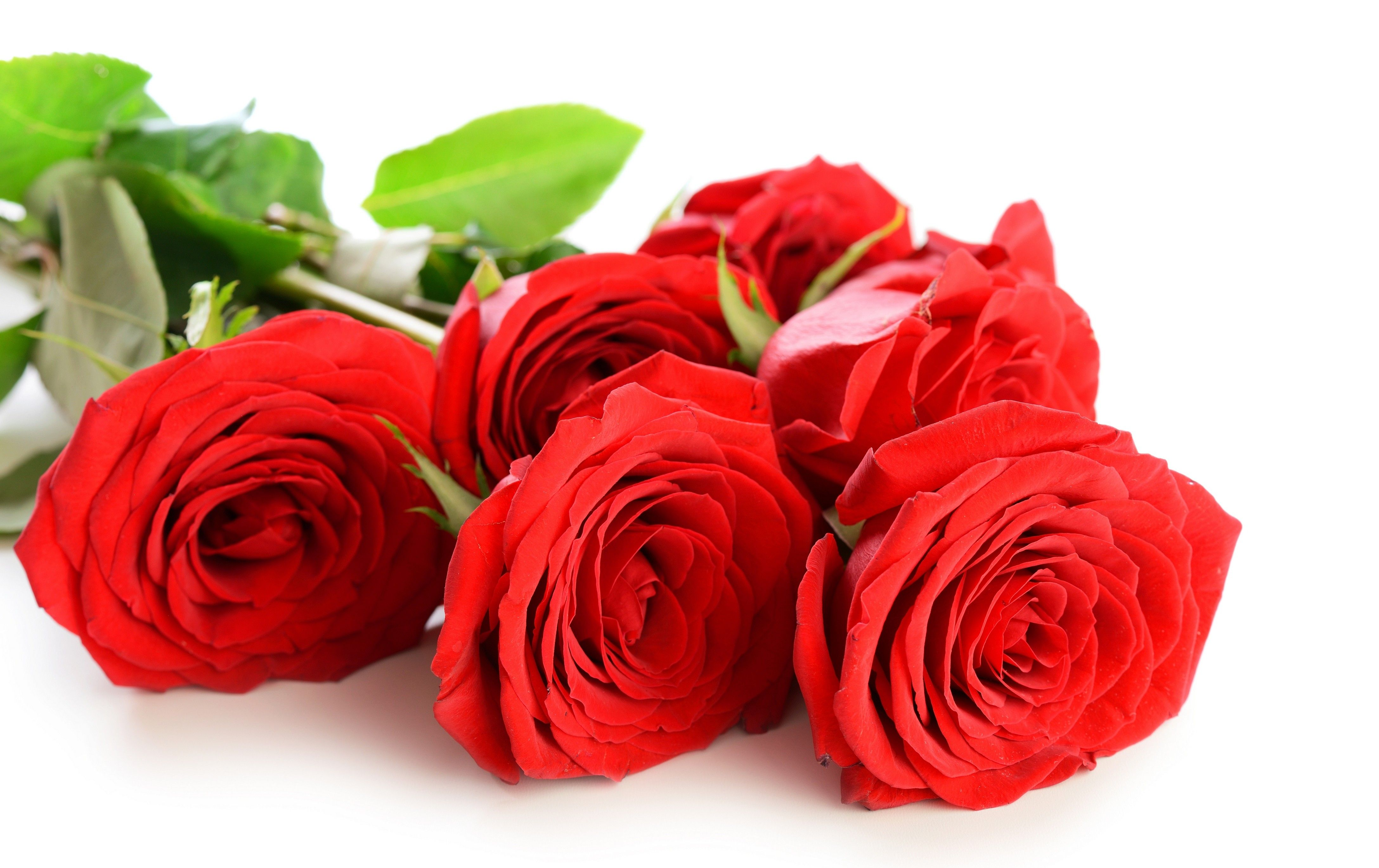 Flowers: Rose Love Red Petals Nature Roses Flowers Flower Wallpapers ...