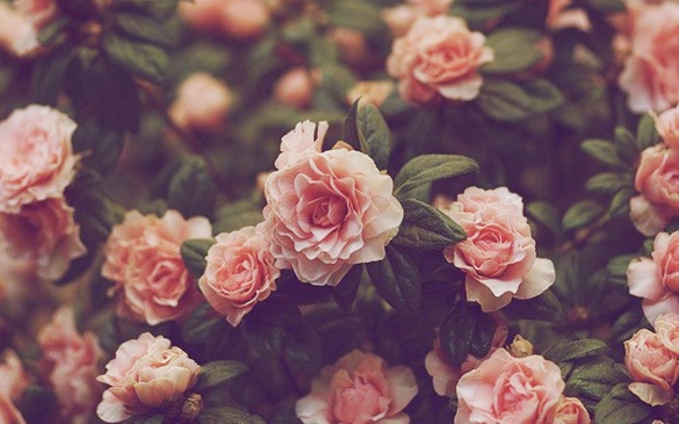 Vintage Flower Wallpaper Tumblr Sf Wallpaper | Gardening: Flower and ...