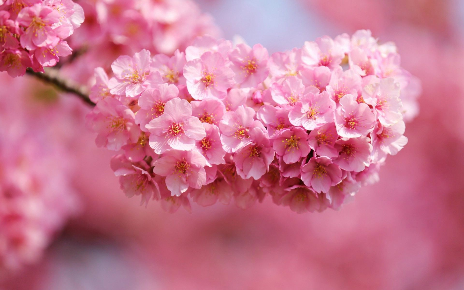 Flowers: Spring Beautiful Flowers Blossoms Pink Tropical Flower ...