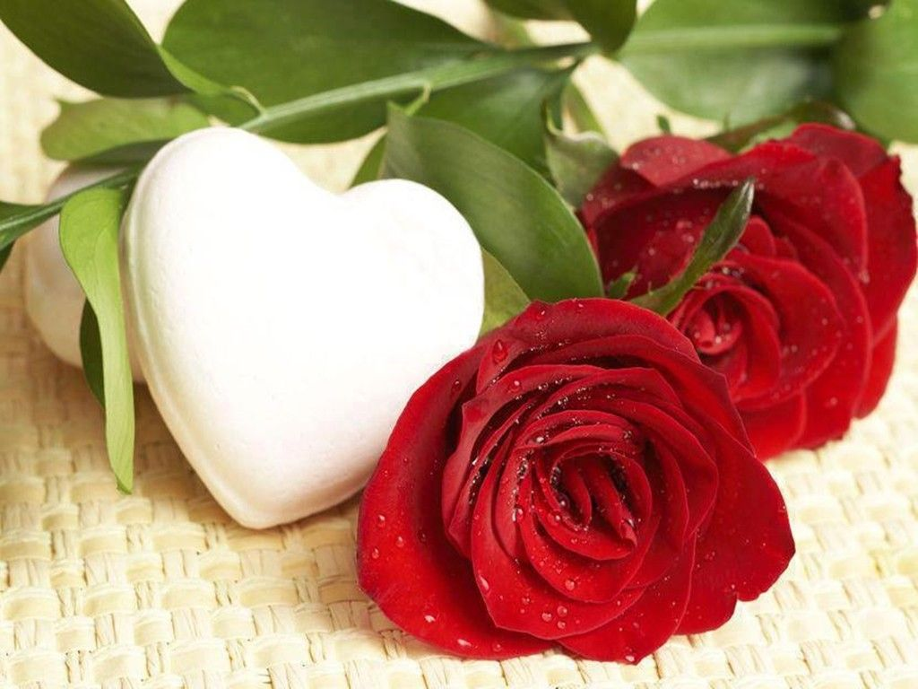 Romantic Red Rose Wallpaper High Resolution Hd Flowers White Love ...