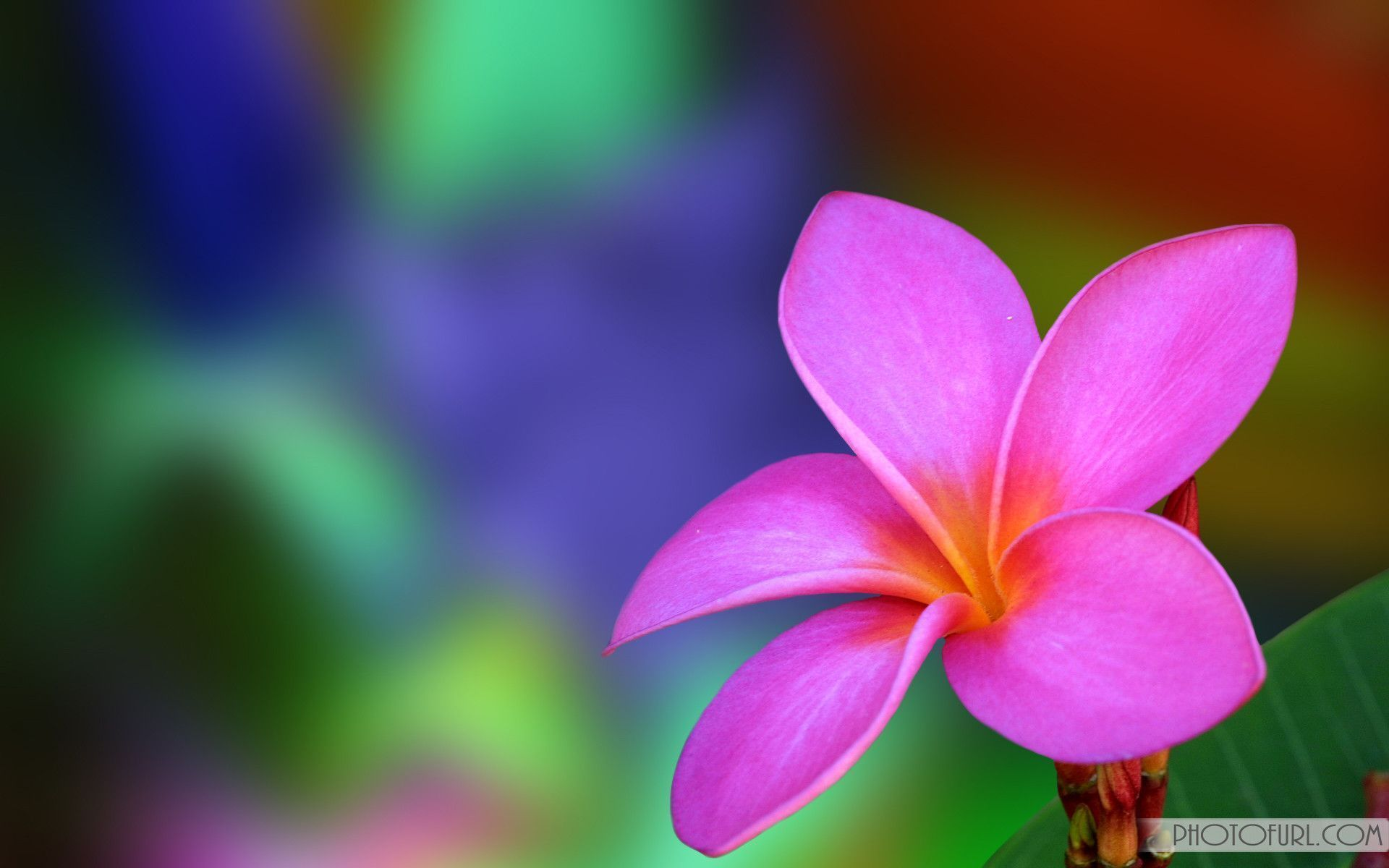 Flower Wallpapers For Computer Wallpaper Desktop On Full Hd Pics ...