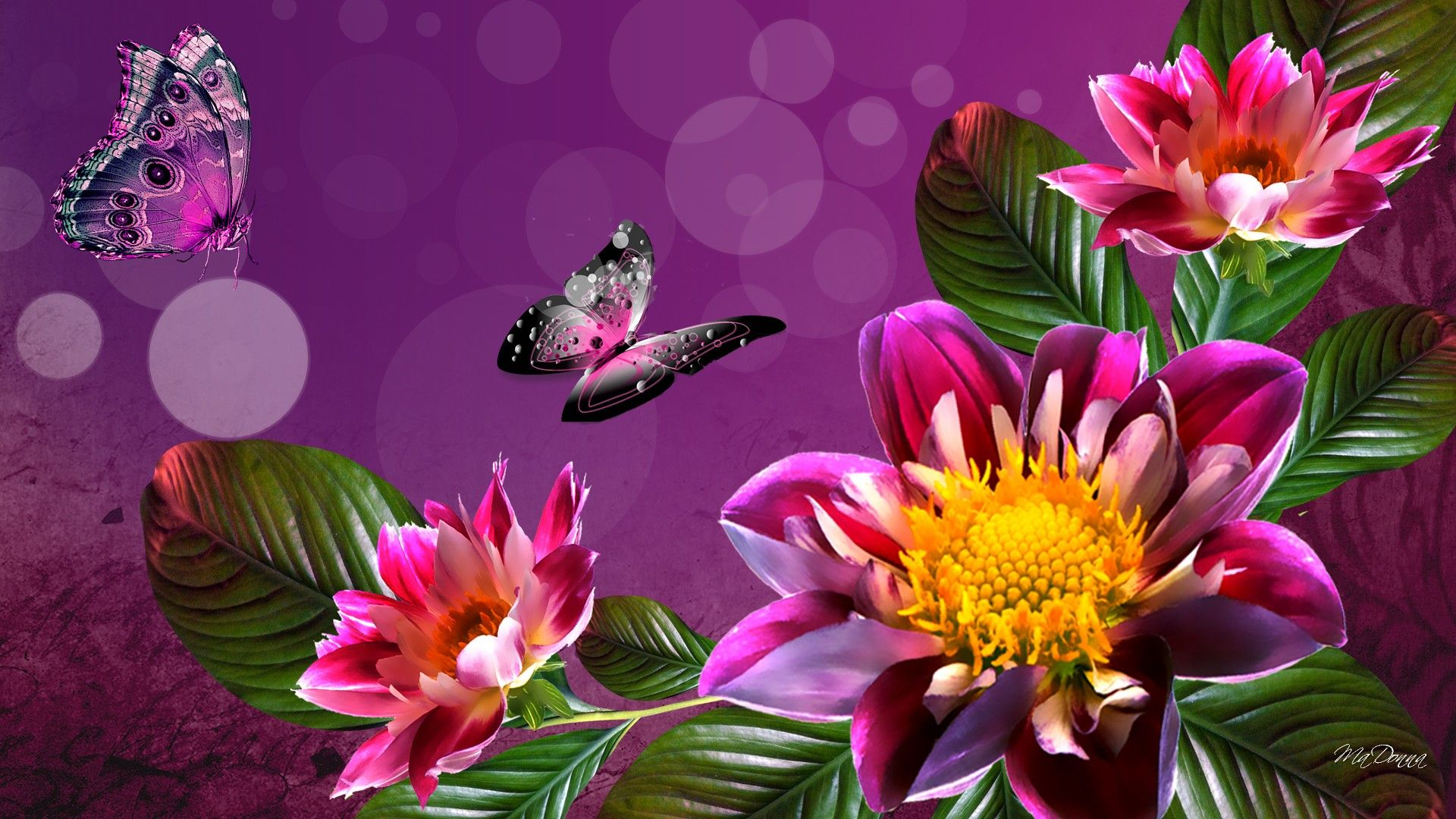 Download Hd Flower Background Wallpaper High Resolution Desktop ...