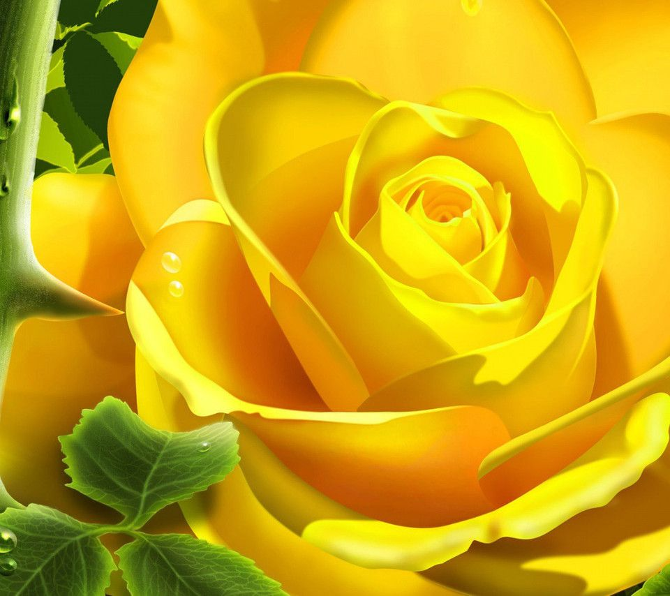 flowers for flower lovers.: Flowers wallpapers desktop backgrounds.