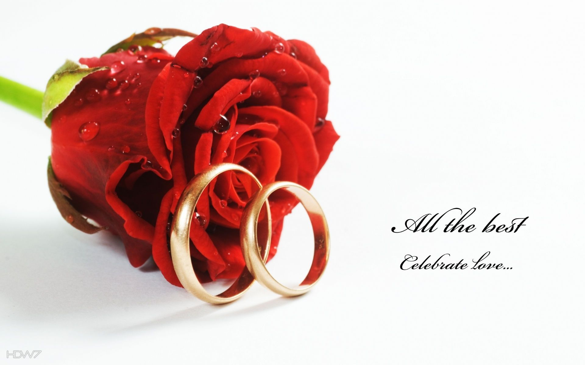 wedding rings red rose flower celebrate love | HD wallpaper gallery #122