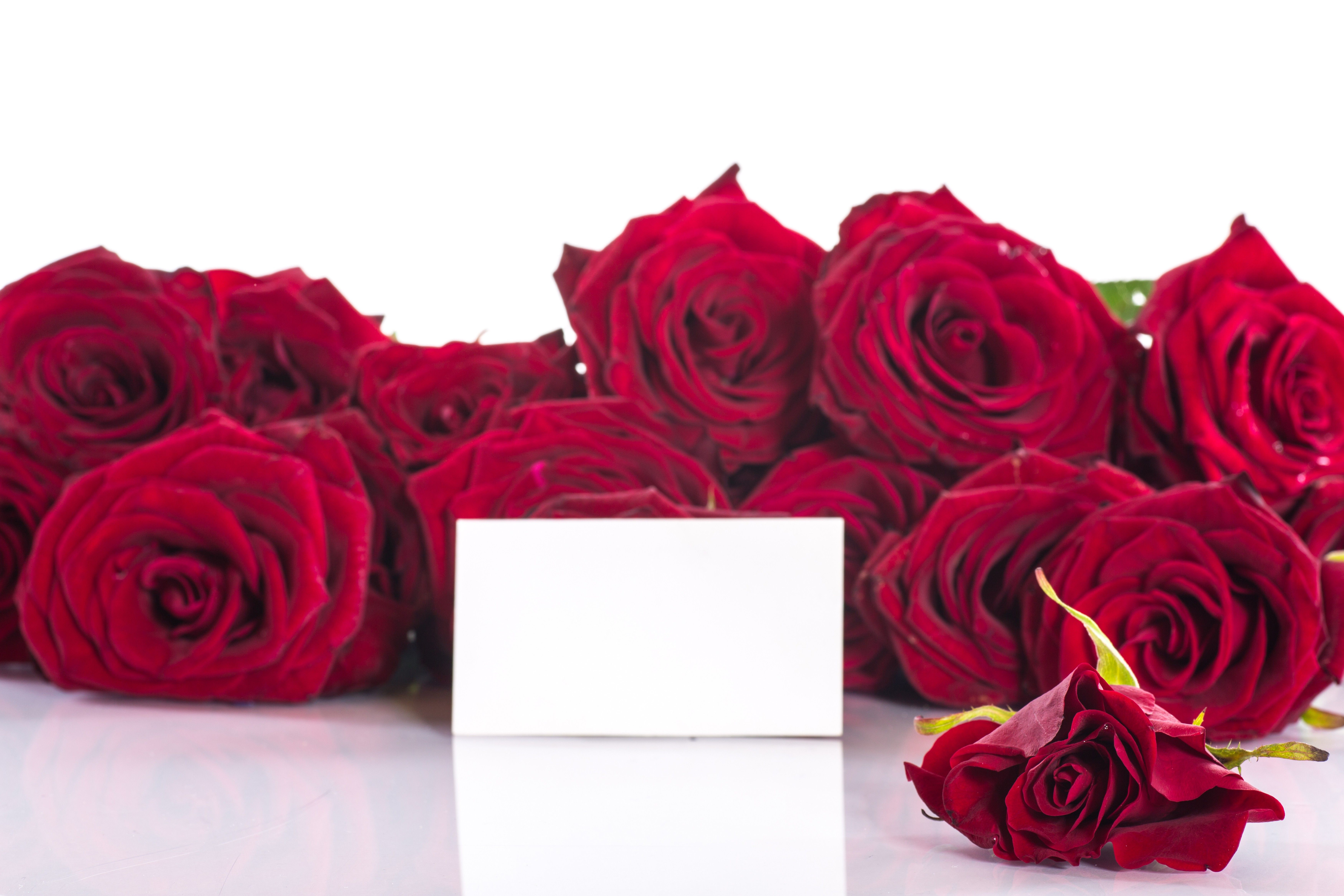 Flowers: Petals Flowers Nature Red Roses Love Rose Flower Wallpapers ...