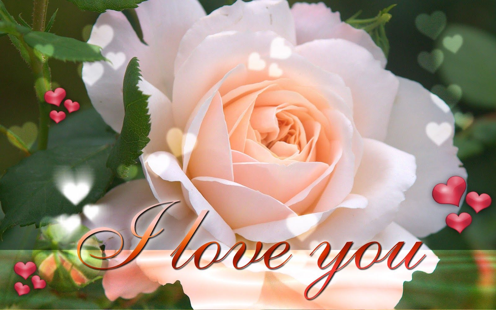 Funny Pictures Gallery: Love roses wallpapers, love rose flower ...