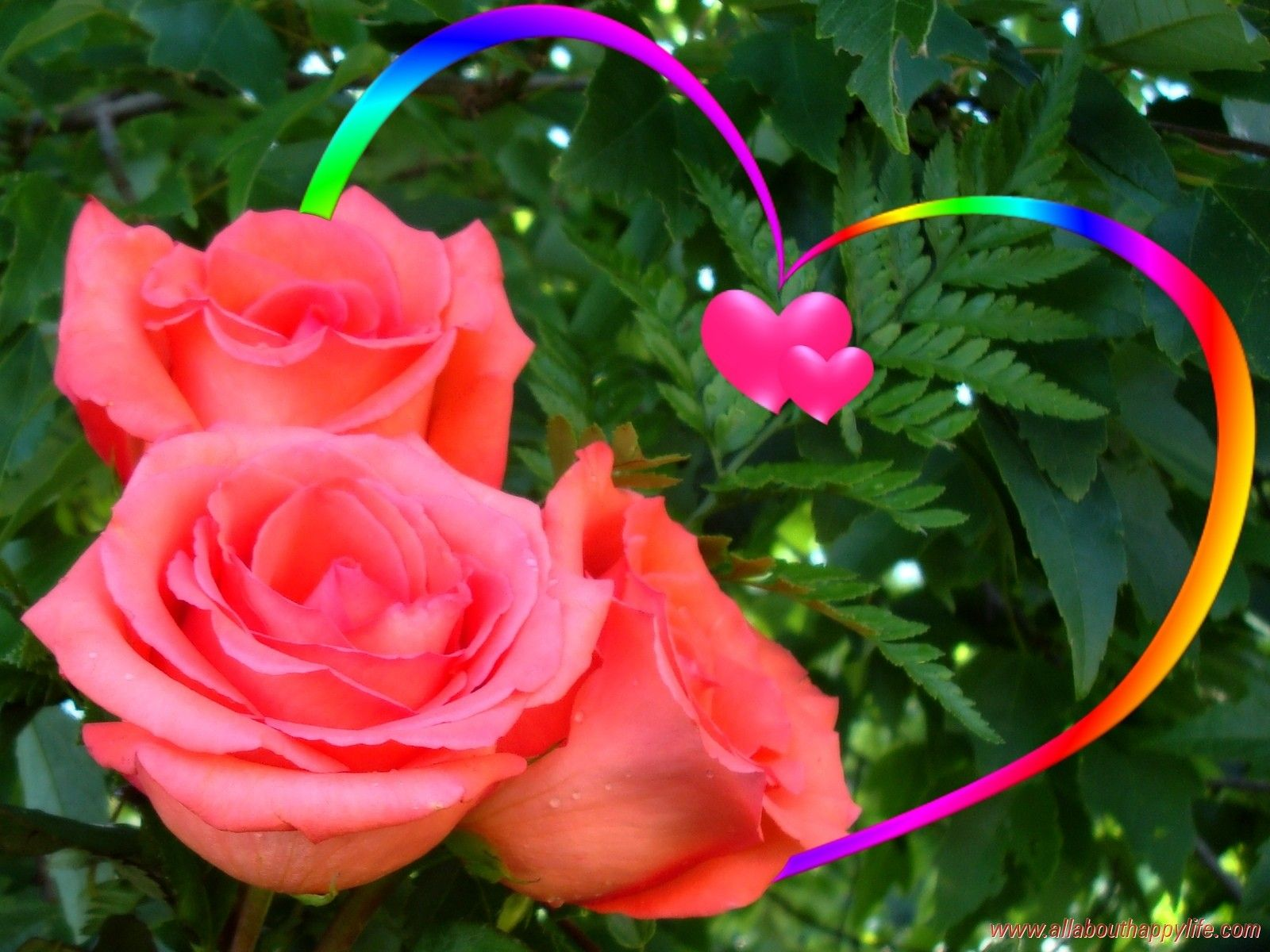 Flowers: Love Rainbow Heart Colored Beautiful Leaves Roses Green ...
