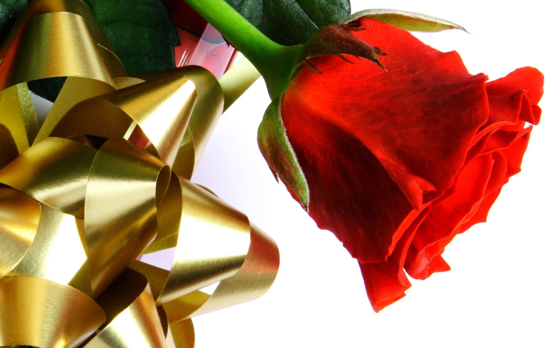 Wallpapers Collection «Love Rose Wallpapers»   wallpapers ...