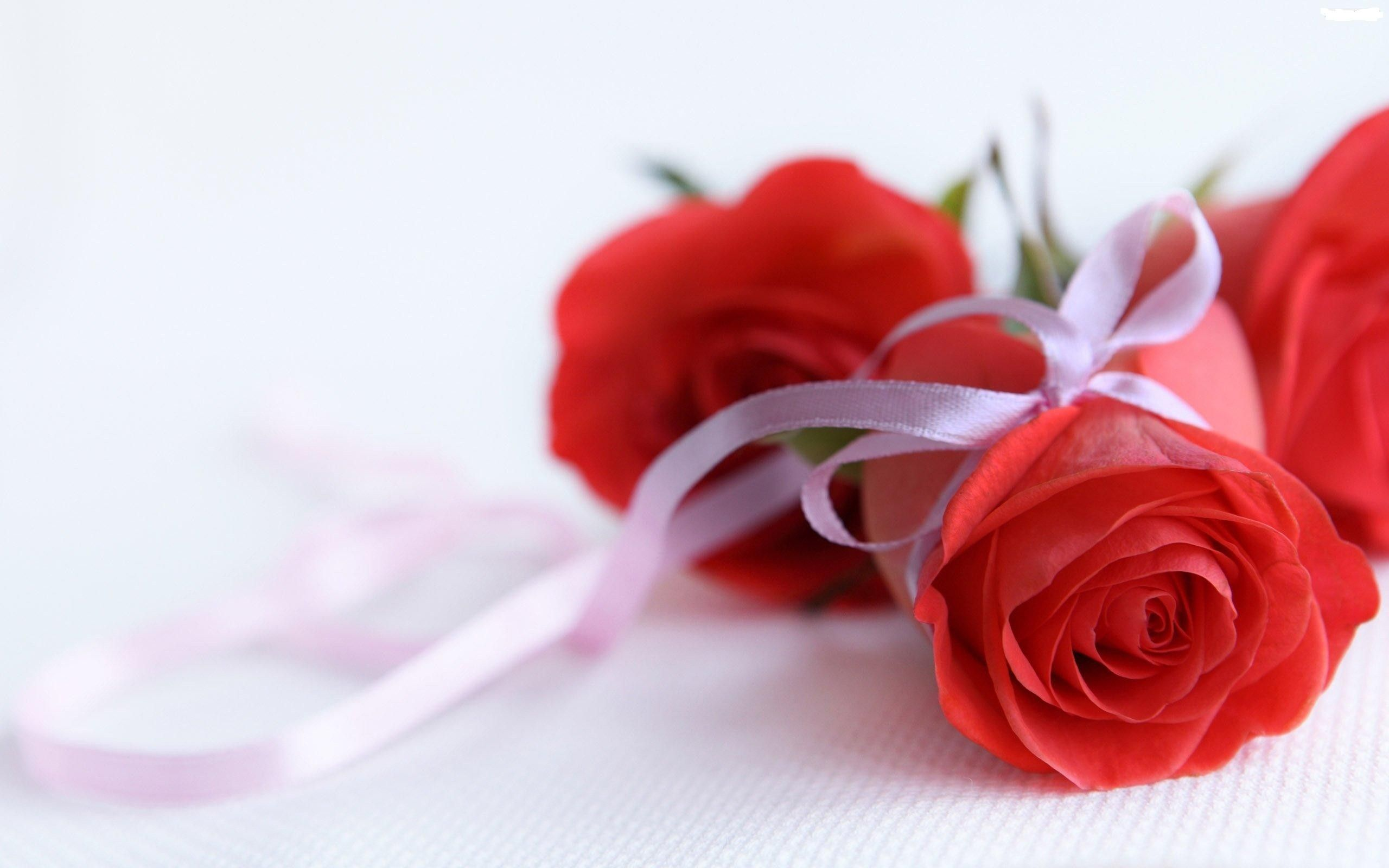 Widescreen Love Flower Afari With Rose New Lmages Full Hd Pics For ...
