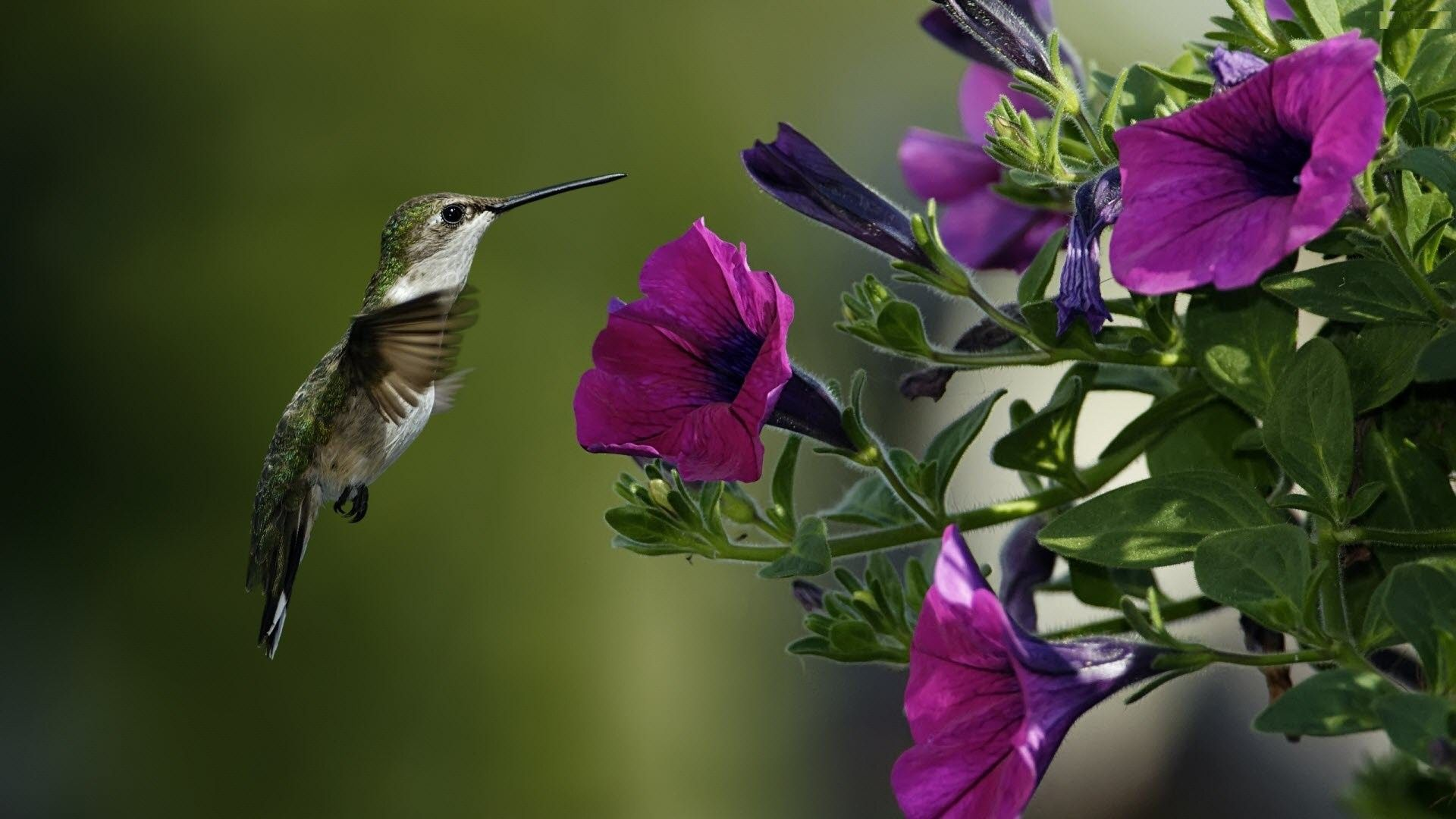 Free Purple Flowers Bird Full Screen High Resolution Wallpapers ...