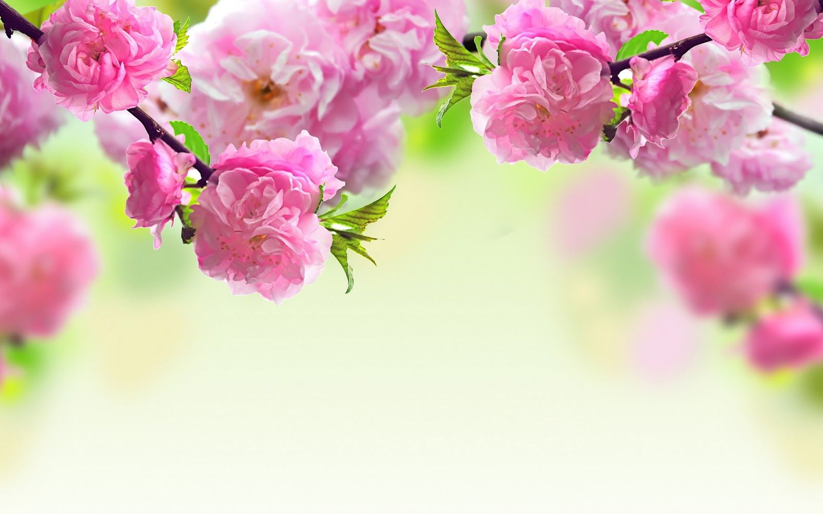flowers wallpaper hd for desktop free download full screen - full ...