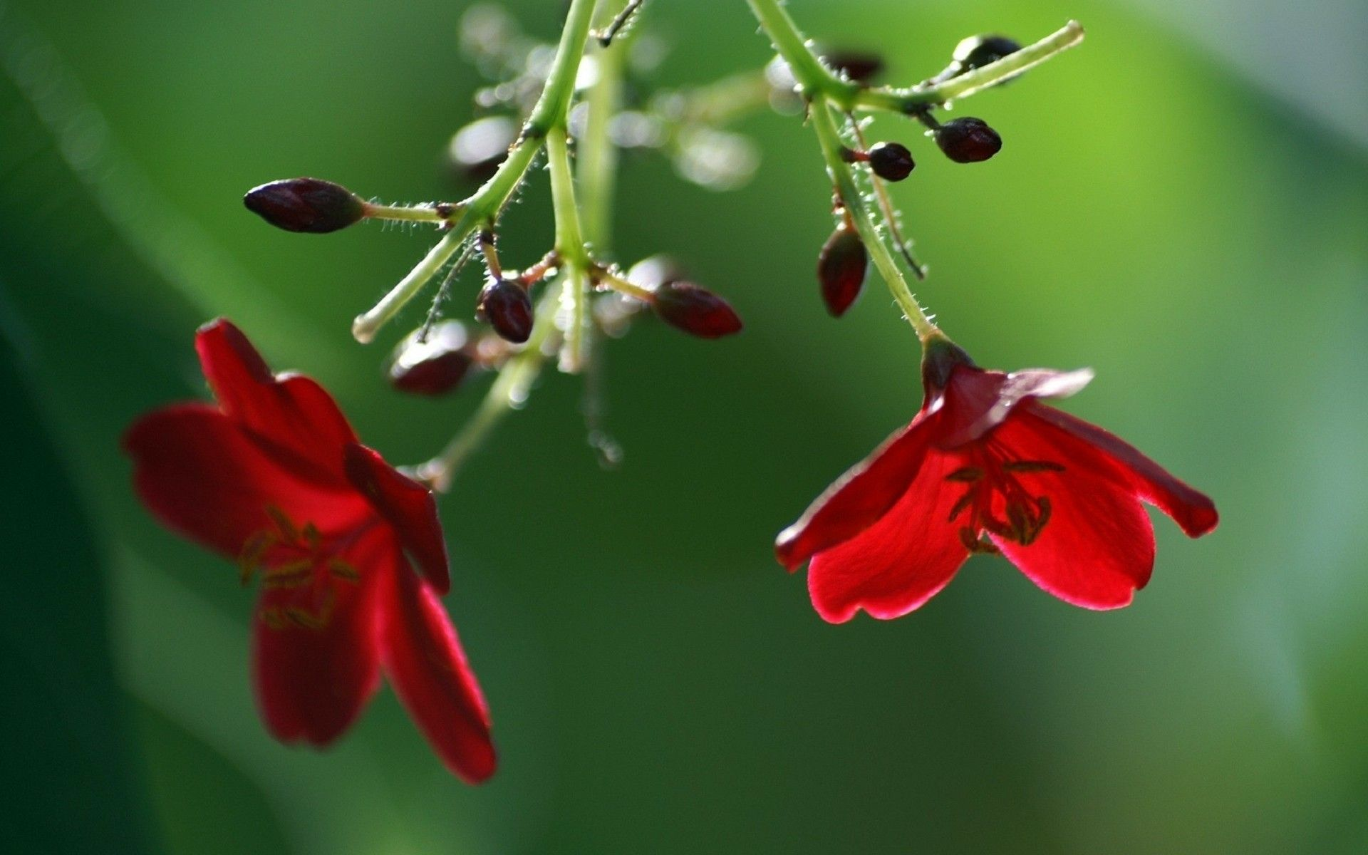 Free Fresh Red Flower Hd Images Cool Fullscreen Wallpapers ...