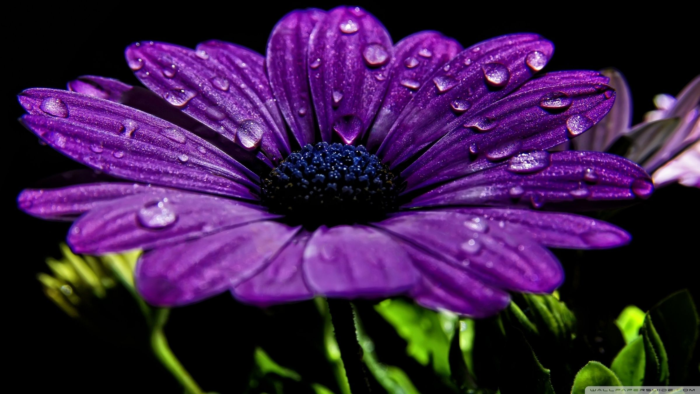 Beautiful Purple Flower ❤ 4K HD Desktop Wallpaper for 4K Ultra HD ...