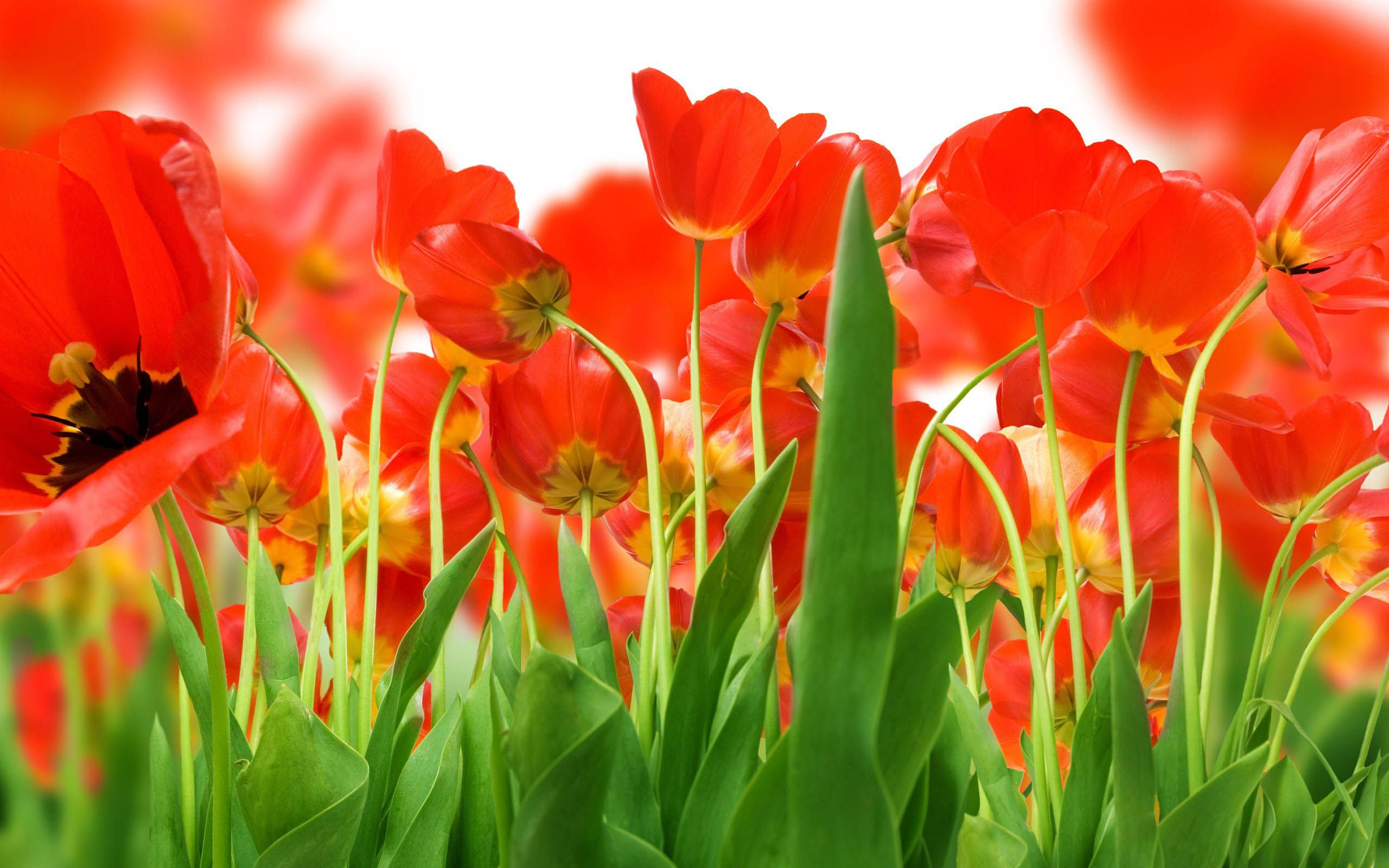 Awesome Flowers Wallpaper Desktop Background Full Screen | Download ...