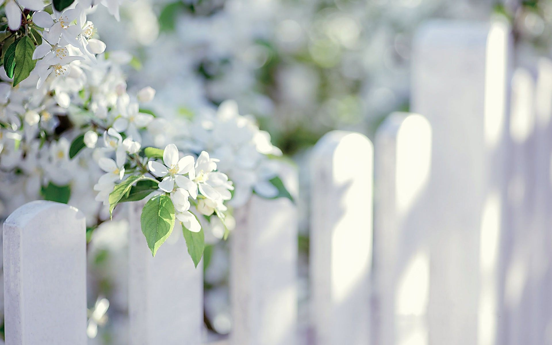 Flowers: Tree Beautiful White Summer Nature Beauty Flower Wallpaper ...