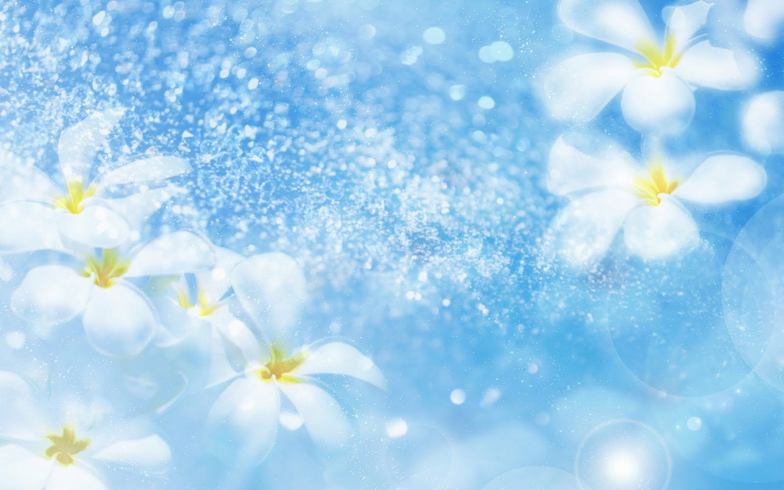 Flowers, White, Blue Background, Fresh, Lovely wallpaper | flowers ...