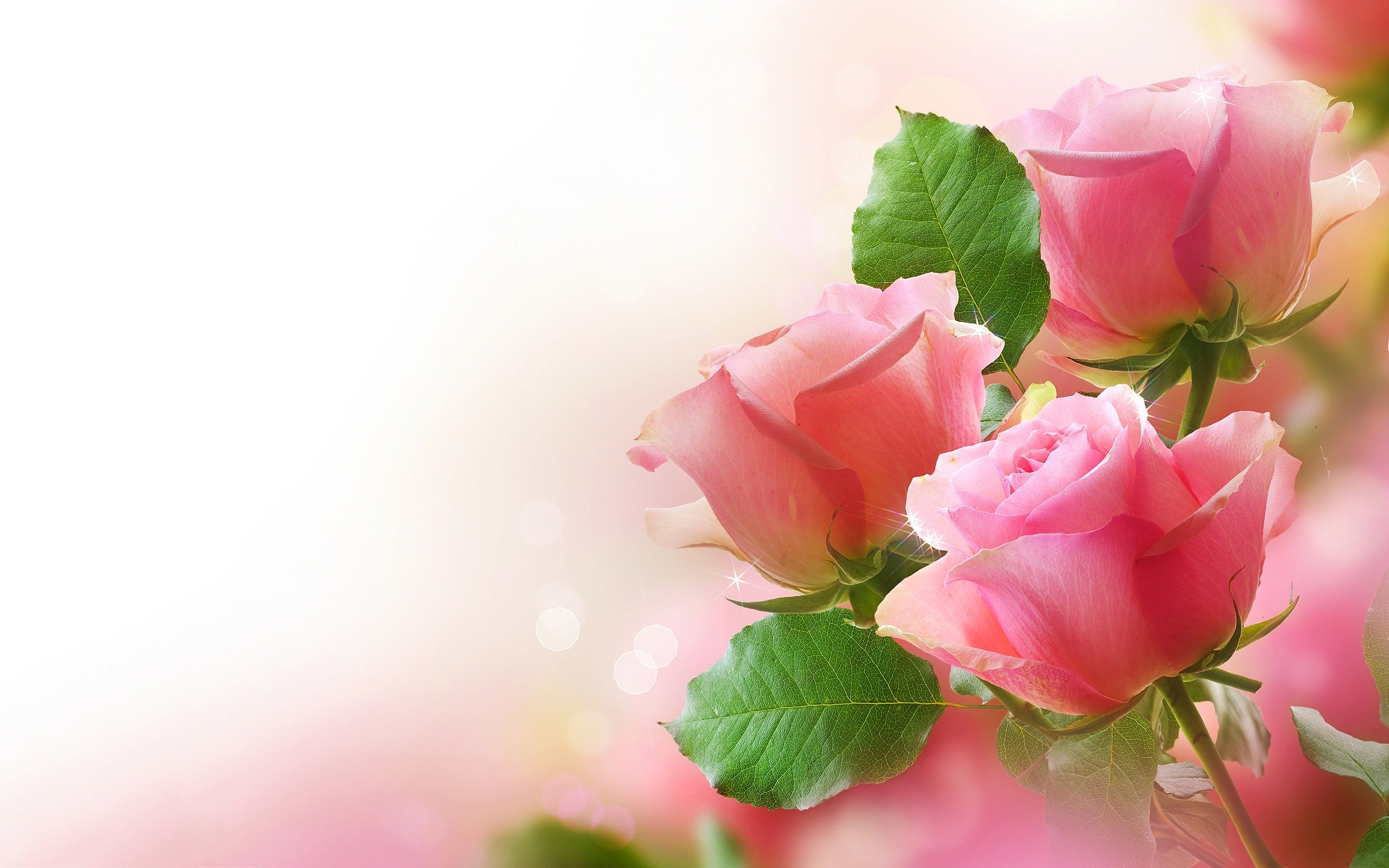 Rose Wallpapers For Desktop Full Size Hd Cool 7 HD Wallpapers ...