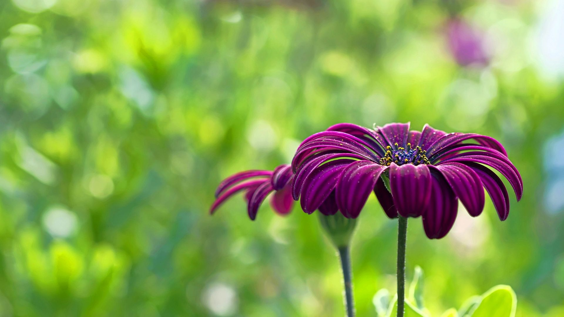 Awesome Flowers Wallpapers For Desktop Full Size Hd Pics Widescreen ...
