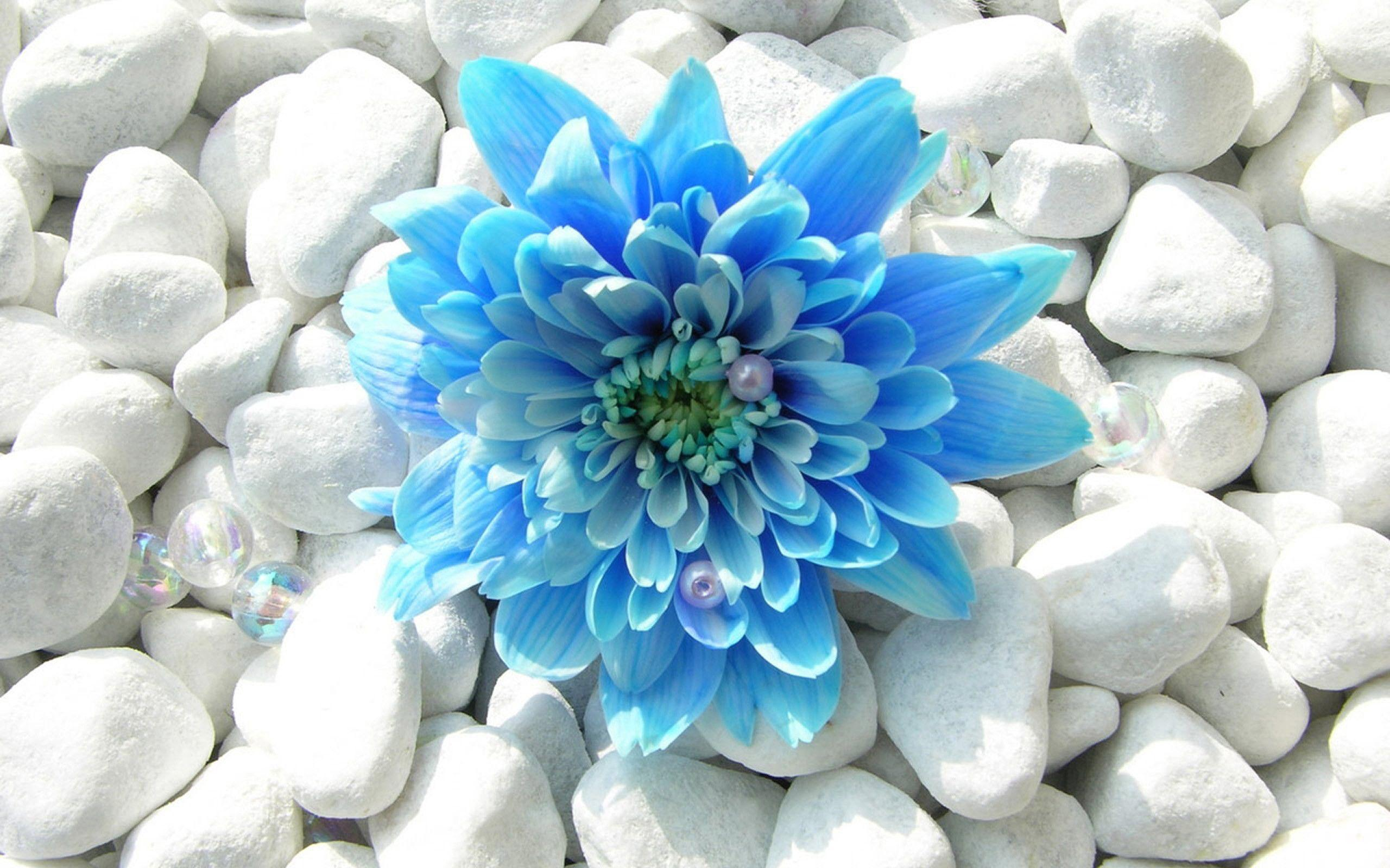 Blue Flower Desktop Wallpaper, wallpaper, Blue Flower Desktop ...