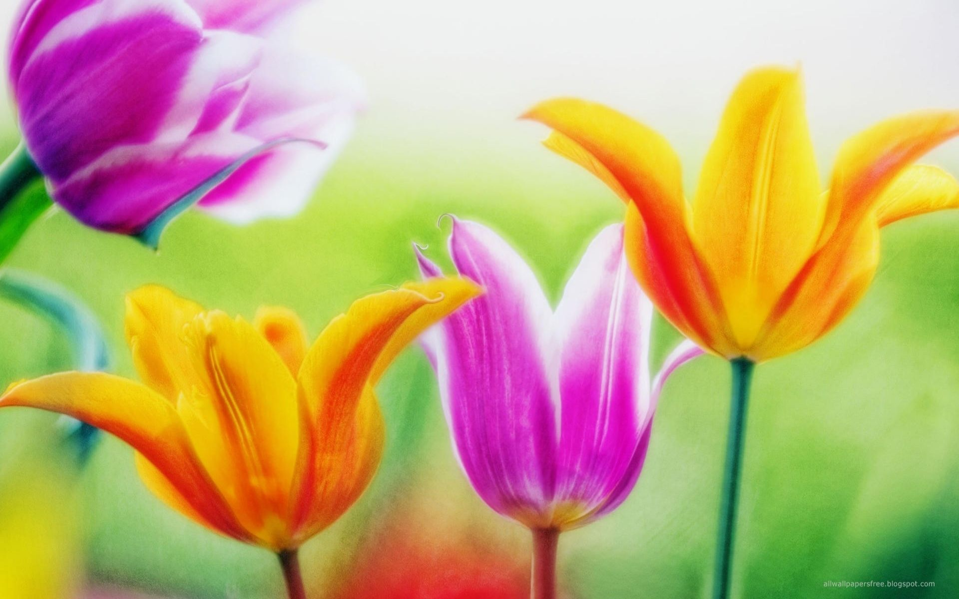 Flowers Wallpapers Desktop Group (93+)