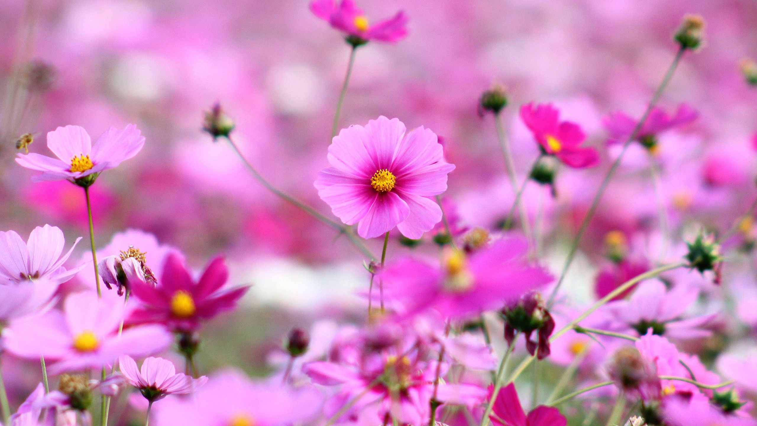 Best Flowers Hd Wallpapers For Desktop Images Wallpaper Phone ...