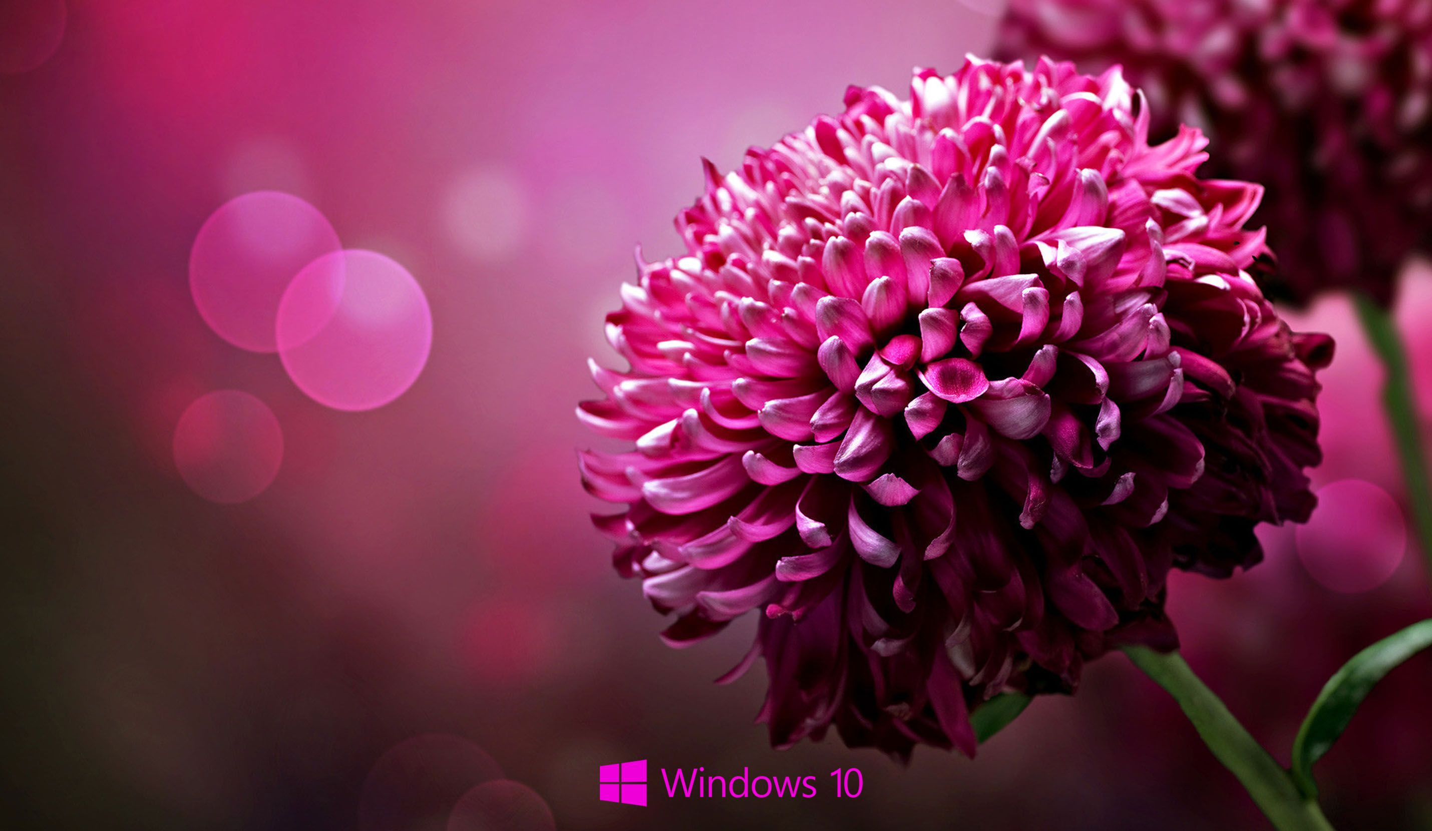 Wallpaper Of Laptop Hd For Windows Flower Pics Smartphone ...