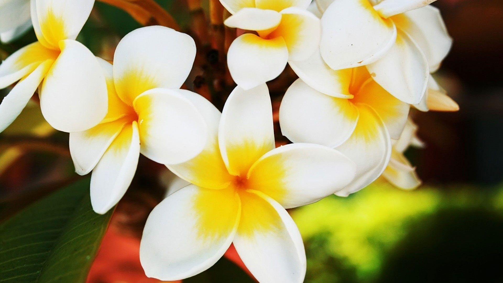 Flowers Pretty Yellow White Flower Wallpaper Desktop Full Size ...